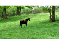 Pastures with tree protections_new