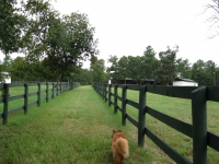 wide alleys between paddocks