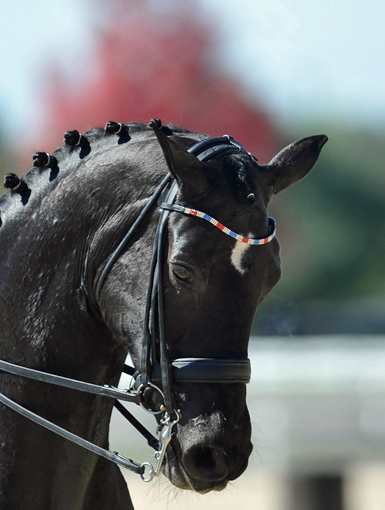 Her Highness O browband