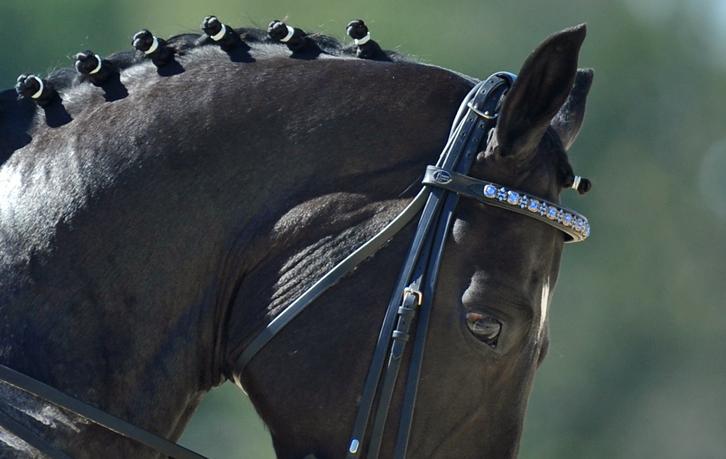 Rosmarin browband