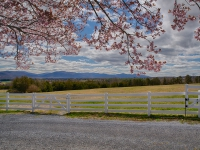 CherryBlossomsFenceMountains