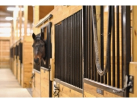 CR interior with horse